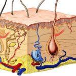 Despre epidermă